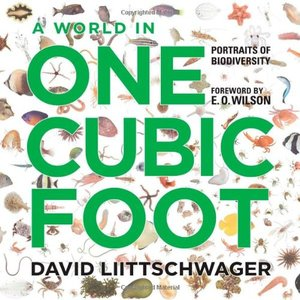 Preview thumbnail for video 'A World in One Cubic Foot: Portraits of Biodiversity