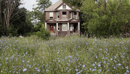 Just Let Detroit's Vacant Lots Run Wild