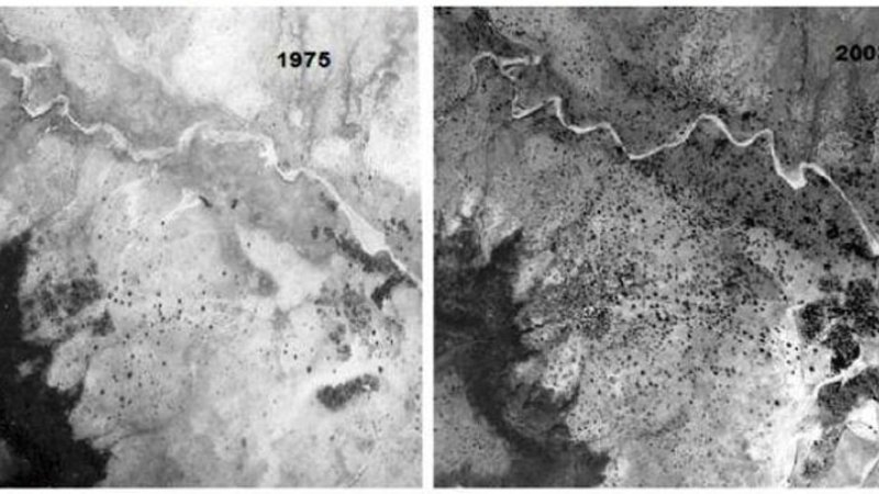 Reforestation surrounding the town of Galma in Niger seen in this image comparing tree cover in 1975 with 2003.