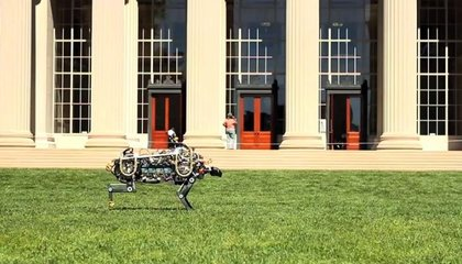 At MIT, a Robot Cheetah Is Sprinting—And Leaping—Across Campus