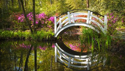 The Southern Romance of the Nation's Oldest Public Garden