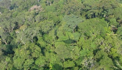 Browse Though the Amazon's 12,000 Tree Species in This New Master List