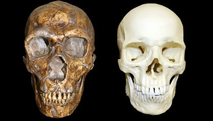 How Ancient Neanderthal DNA Still Influences Our Genes Today