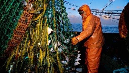 Why Smarter Fishing Practices Aren't Saving Maine Cod From Collapse