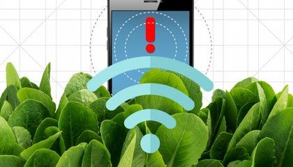 Spinach: The Superfood That Could Help Detect Bombs