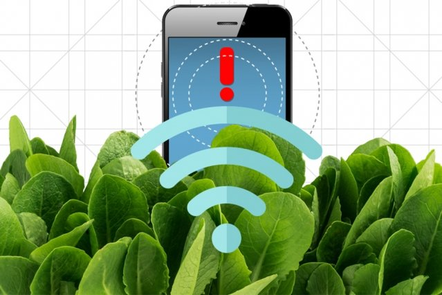 Spinach Phone