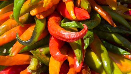 Salty Groundwater is Threatening New Mexico's Chiles