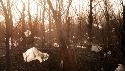 Why Michigan Banned Banning Plastic Bags