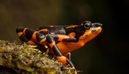 This Photographer Set Out on a Quest to Rediscover the World's Lost Species of Frogs