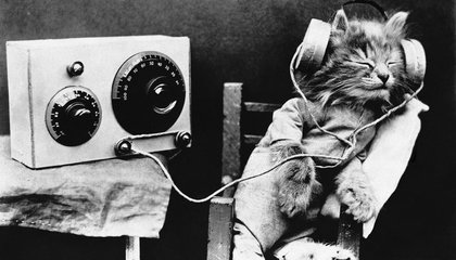 Here's What Music Specially Composed for Your Cat Sounds Like