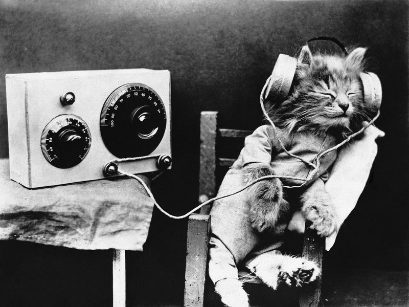 Species Specific Music For Cats