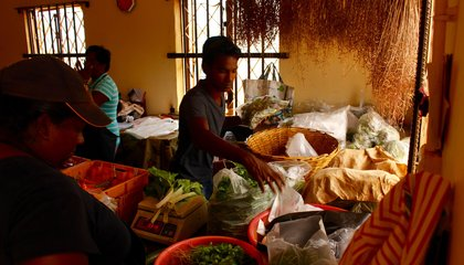 Against All Odds, This Indian Ocean Island Is Trying to Go Organic