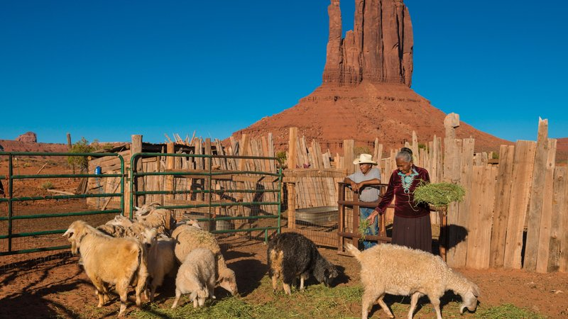 A Navajo woman feeds her herd in Monument Valley, Arizona.