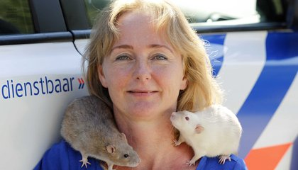 Inside a Dutch Police Academy...for Rats