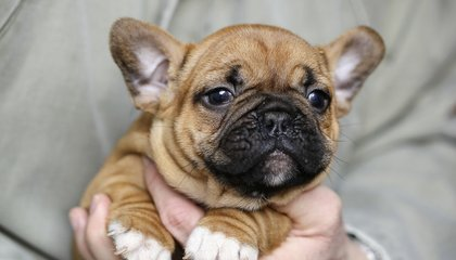 Why Puppies Love Baby Talk