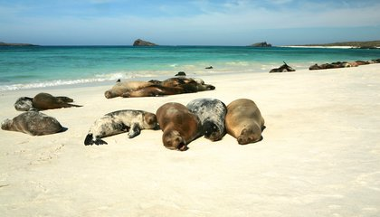 A Major Galapagos Conservation Foundation Is Running Out of Cash
