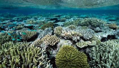 Tiny Bits of Plastic May Be Clogging Up Corals