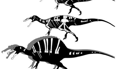 What Do We Know About Spinosaurs?