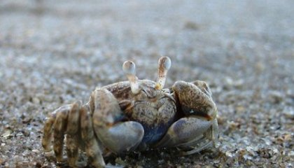Inviting Writing: Scary Shellfish and Other Food Fears