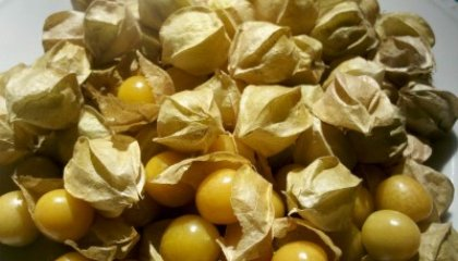 Five Ways to Eat Ground Cherries