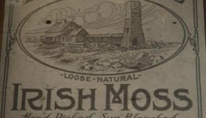 Eating Irish Moss
