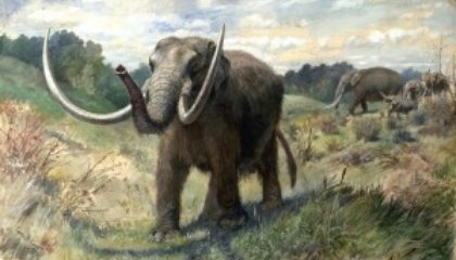 Accepting the Idea of Extinction