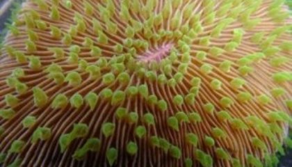 Scientists Create Coral Sperm Bank in Hawaii