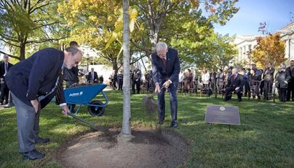 For the Veterans, A Tree Grows at American History