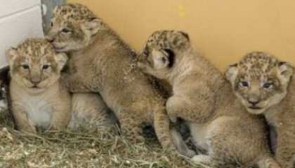 The List: Five Must See Webcams at the Zoo