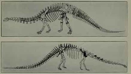 Two Views on How to Make a Baby Sauropod