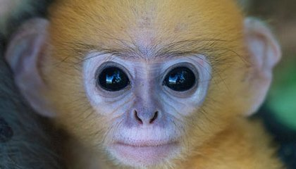 Snake-Spotting Theory Brings Primate Vision into Focus