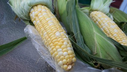 Five Ways to Eat Fresh Corn