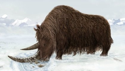 Woolly Rhino May Have Been A Tibetan Native