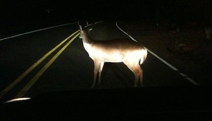 Is it Safe to Eat Roadkill?