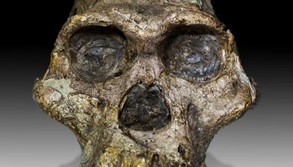 The Best Places to See Hominid Bones Online