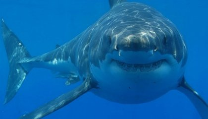 The Secrets of a Shark Attack