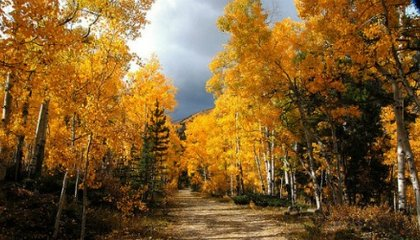 What Was Killing the Aspens?