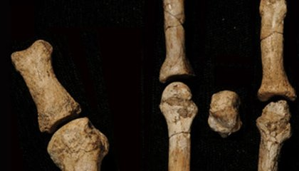 New Hominid Fossil Foot Belonged to Lucy's Neighbor