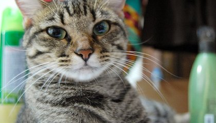 With No Human Supervision, 16,000 Computers Learn to Recognize Cats