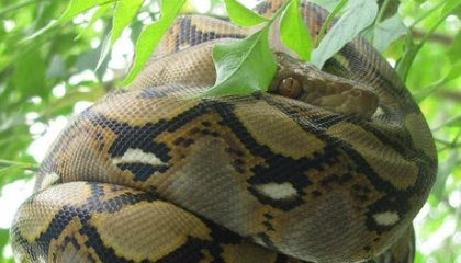 Snakes: The Good, the Bad and the Deadly