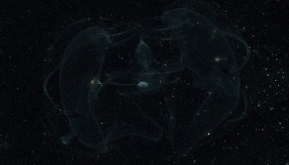 Bioluminescent Worms Welcomed Columbus to the New World