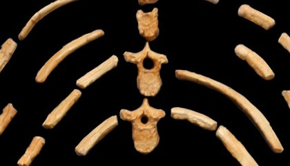 The Top Ten Human Evolution Discoveries from Ethiopia