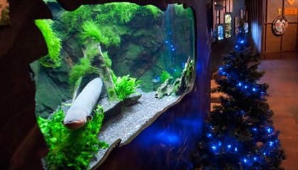 A Twinkling Christmas Tree, Powered by…an Electric Eel?