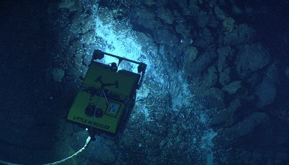 Scientists Pluck Blind Shrimp and Other Strange Life Forms From World's Deepest Hydrothermal Vent