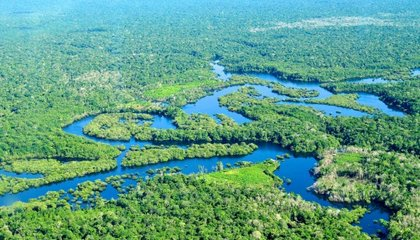 The Amazon Rainforest Should Deal With Climate Change Better Than We Thought