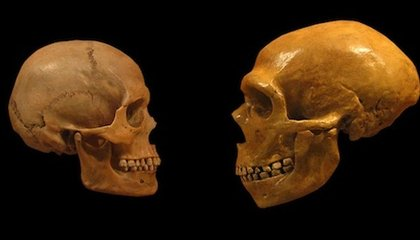 Science Shows Why You're Smarter Than a Neanderthal