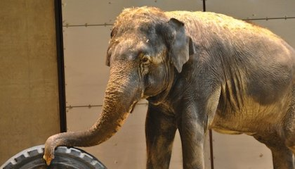Look Out! Look Out! Elephants Get New Digs