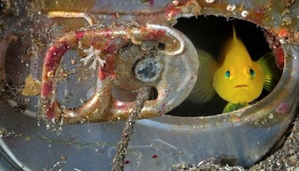 Photos: Scenes From Life Under the Sea