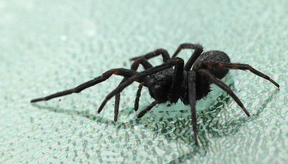 If You Must Kill That Spider, The Best Way Is To Freeze It