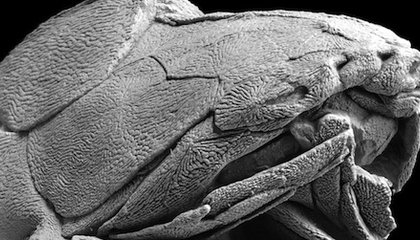 This 419-Million-Year-Old Fish Has the World's Oldest Known Face